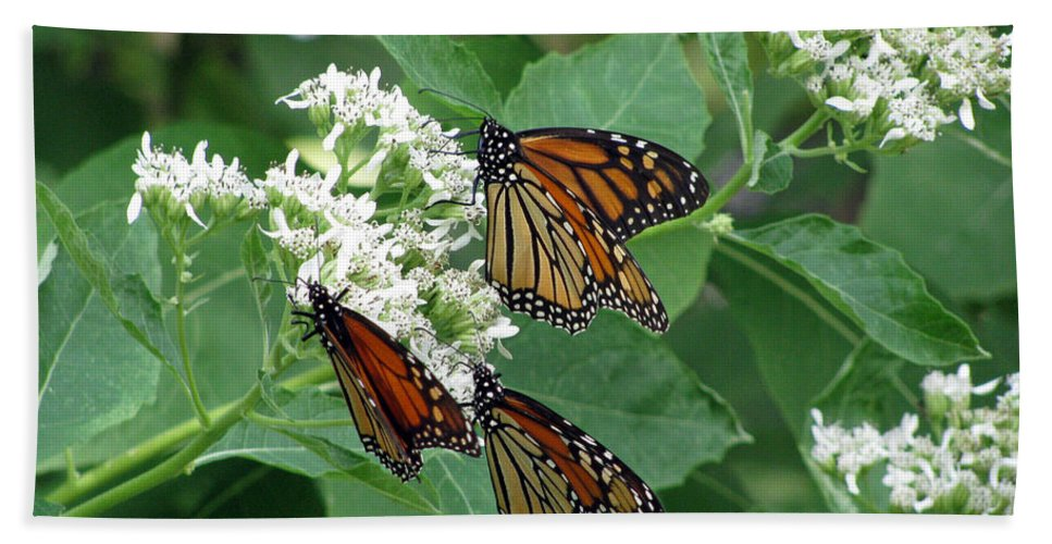 Butterfly Bath Sheet featuring the photograph Monarch Butterfly 63 by Pamela Critchlow