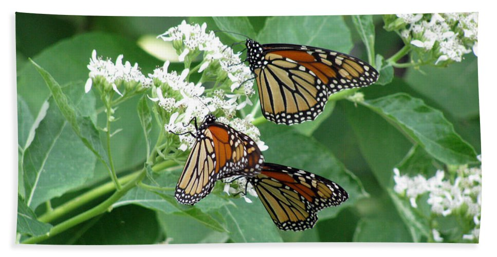Butterfly Bath Sheet featuring the photograph Monarch Butterfly 65 by Pamela Critchlow