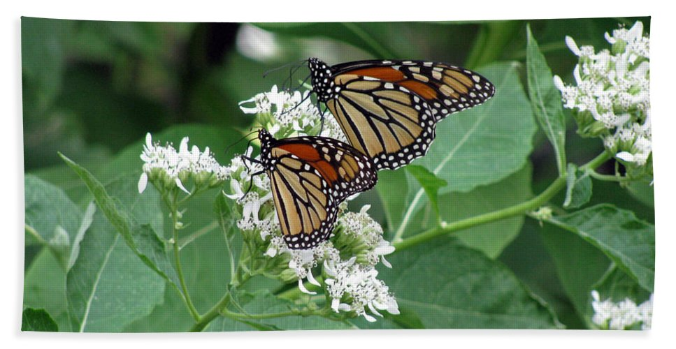 Butterfly Bath Sheet featuring the photograph Monarch Butterfly 70 by Pamela Critchlow
