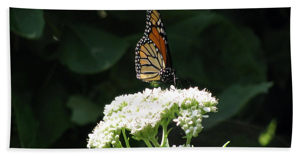Butterfly Bath Sheet featuring the photograph Monarch Butterfly 71 by Pamela Critchlow