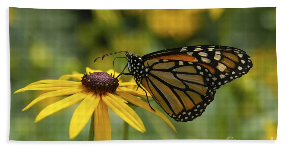 Monarch Butterfly Bath Sheet featuring the photograph Monarch Butterfly by Anthony Sacco
