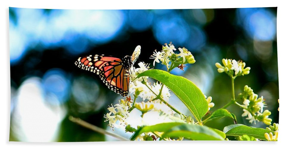 Monarch Butterfly Hand Towel featuring the photograph Monarch Butterfly I by Michael Saunders