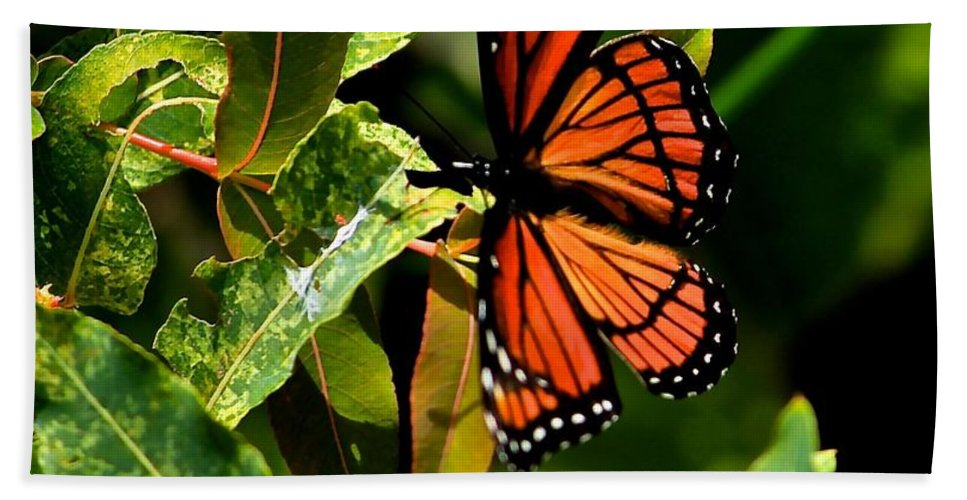 Viceroy Butterfly Hand Towel featuring the photograph Viceroy Butterfly II by Michael Saunders