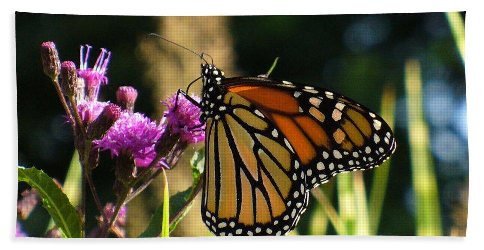 Garden Hand Towel featuring the photograph Monarch Butterfly by Lingfai Leung