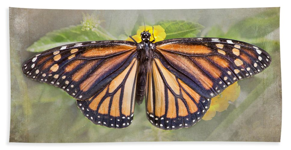 Monarch Butterfly Hand Towel featuring the photograph Monarch Butterfly by TN Fairey