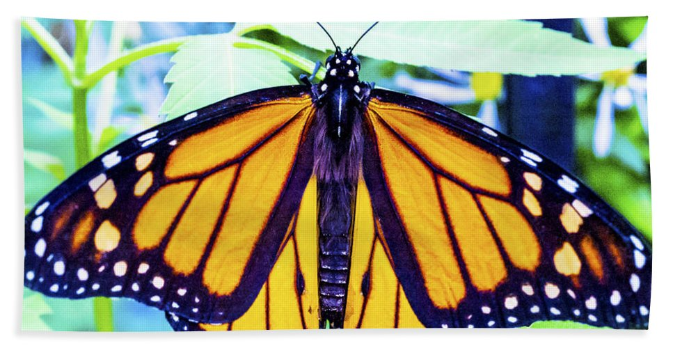 Nj Bath Sheet featuring the photograph Monarch I by Pablo Rosales
