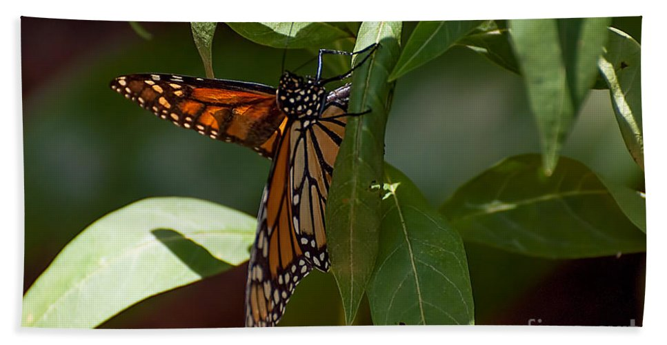 Monarck Bath Sheet featuring the photograph Monarch In The Shade by Photos By Cassandra