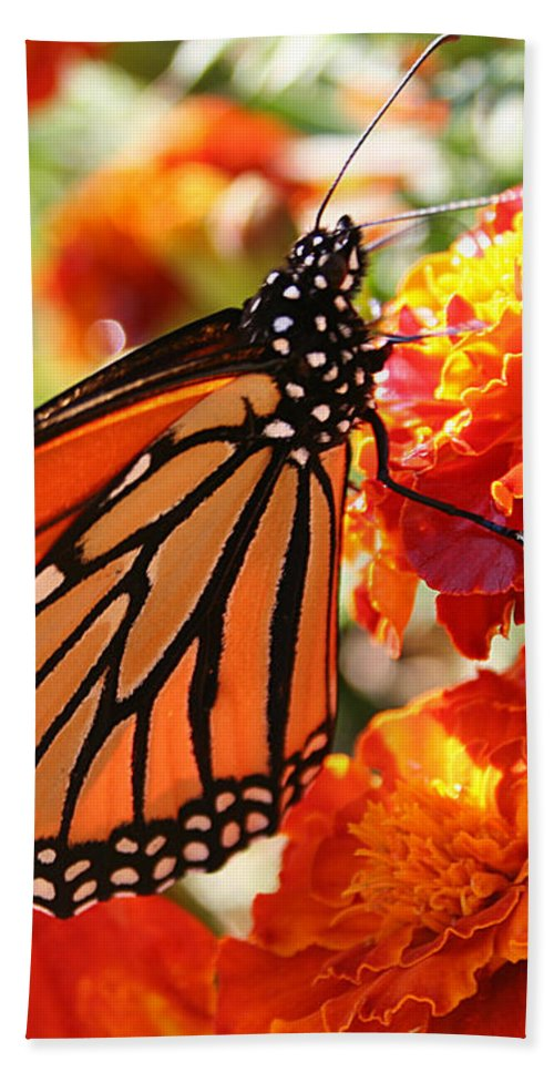 Nature Bath Sheet featuring the photograph Monarch On Marigold by William Selander