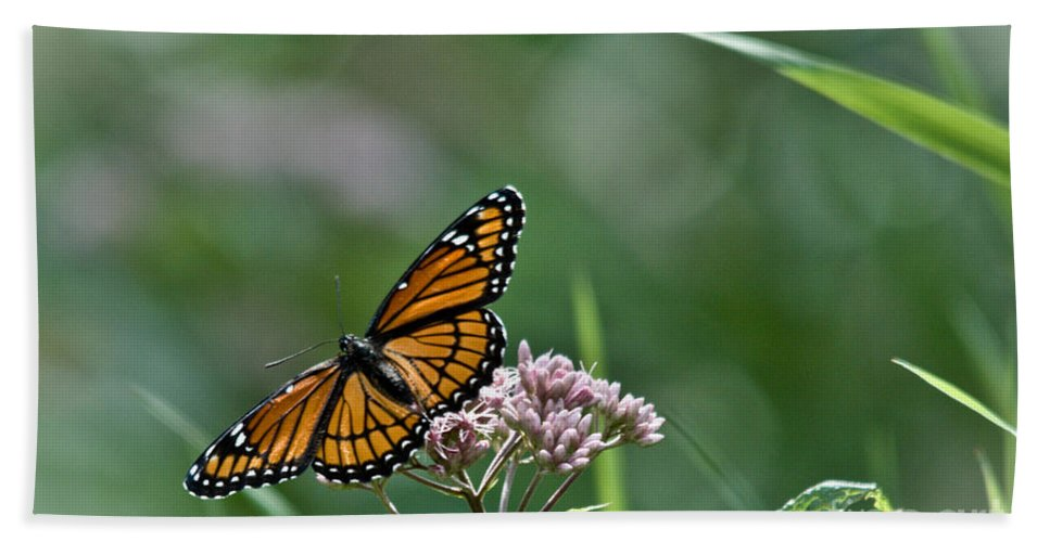 Monarch Hand Towel featuring the photograph Monarch Perch by Cheryl Baxter
