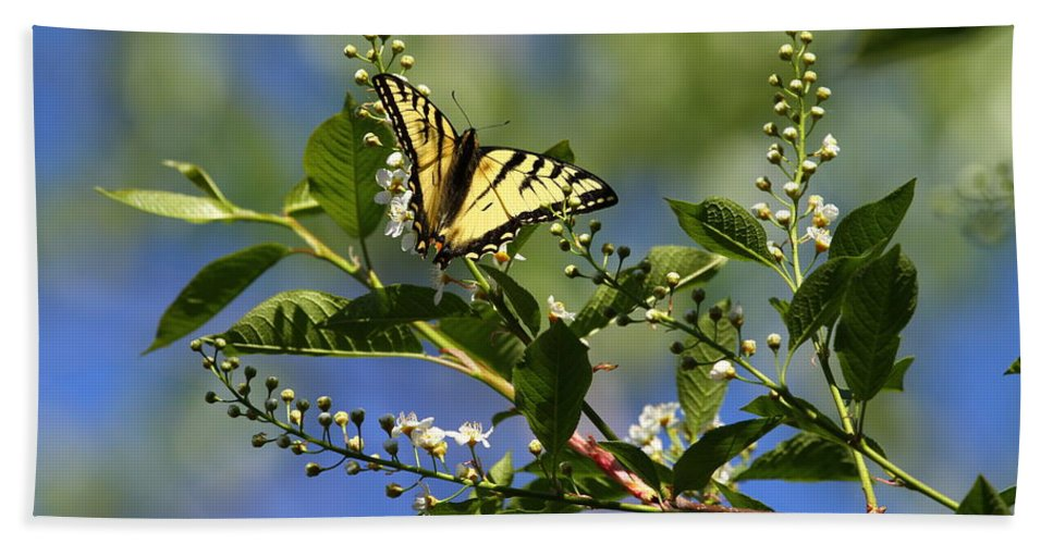 Butterfly Hand Towel featuring the photograph Monarch Tranquility by Dee Carpenter