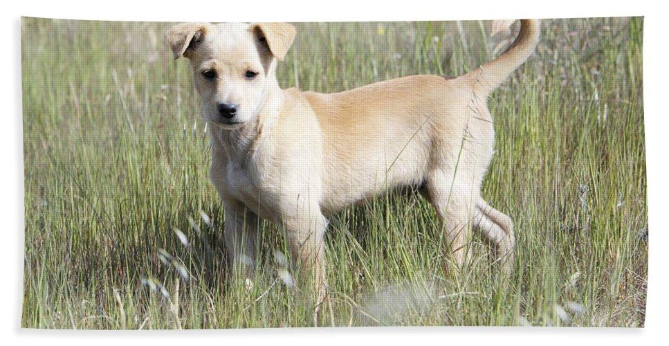 Mongrel Bath Sheet featuring the photograph Mongrel Dog Puppy by Duncan Usher