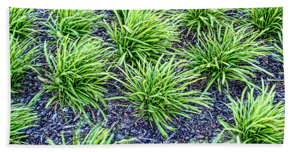 Monkey Grass Bath Sheet featuring the photograph Monkey Grass Abstract by Kathy Clark
