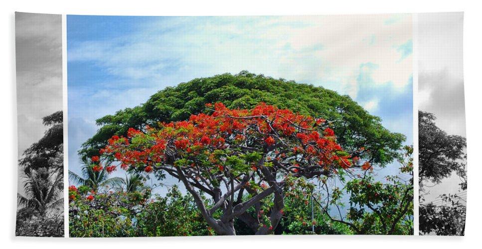 Nature Hand Towel featuring the photograph Monkey Pod Trees - Kona Hawaii by Paulette B Wright