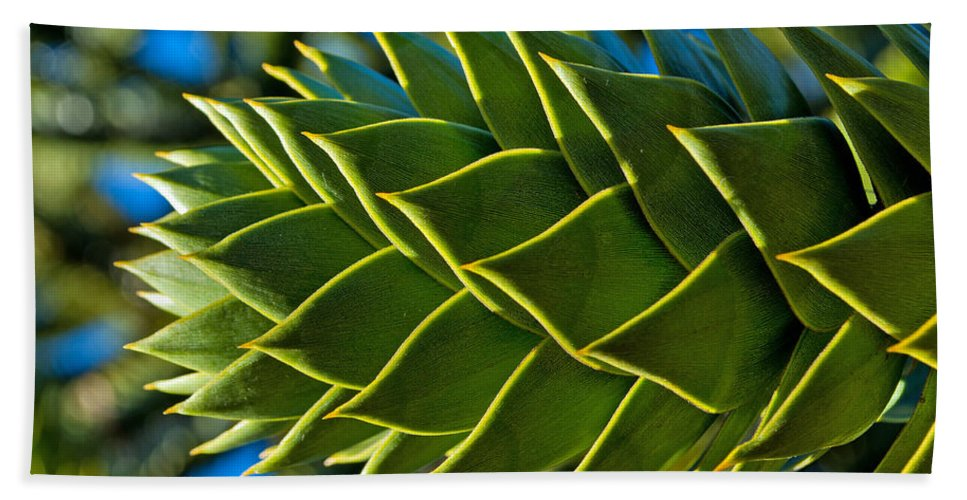 Green Bath Sheet featuring the photograph Monkey Puzzle Tree D by Tikvah's Hope