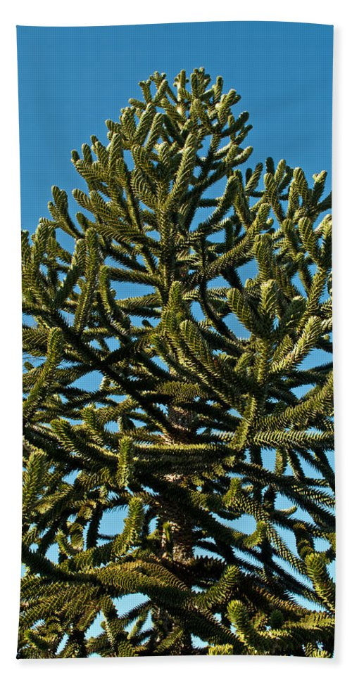 Green Bath Sheet featuring the photograph Monkey Puzzle Tree E by Tikvah's Hope