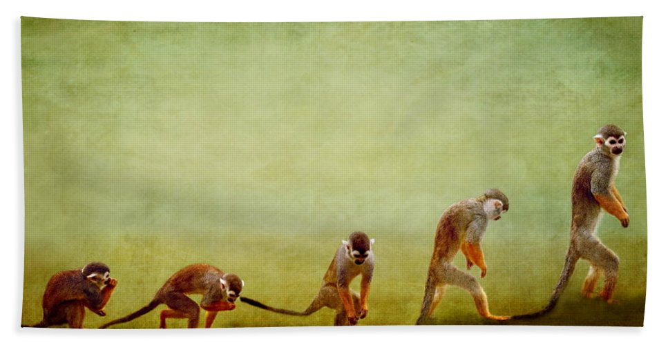 Animal Bath Sheet featuring the photograph Monkeys by Heike Hultsch