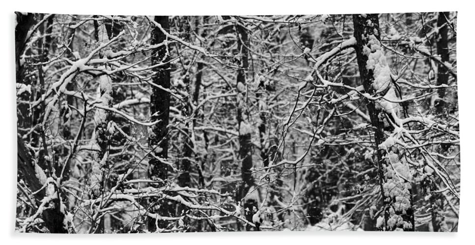 Winter Forest Hand Towel featuring the photograph Monochrome Winter Wilderness by Dan Sproul