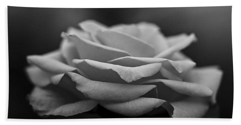 Longwood Gardens Bath Sheet featuring the photograph Monotone Rose by Samantha Eisenhauer