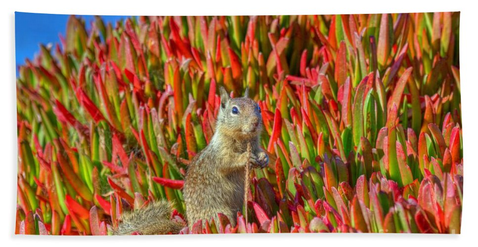 Monterey Bay Hand Towel featuring the photograph Monterey Squirrel by James Anderson