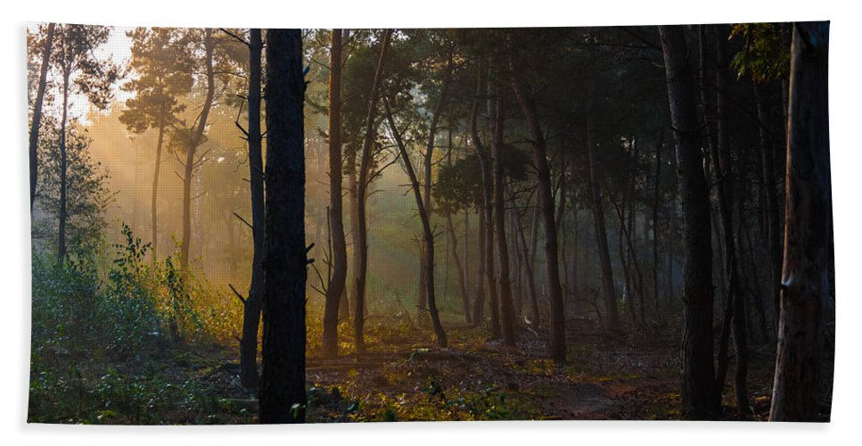 Darkness Hand Towel featuring the photograph Moody Forest Happy Sun by Semmick Photo
