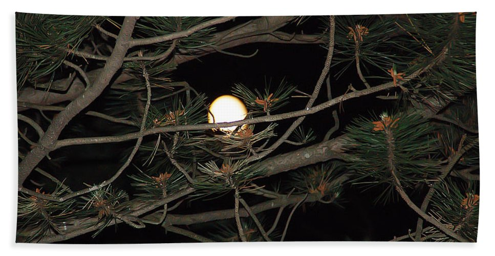 Moon Bath Sheet featuring the photograph Moon Through Pines by Aimee L Maher ALM GALLERY