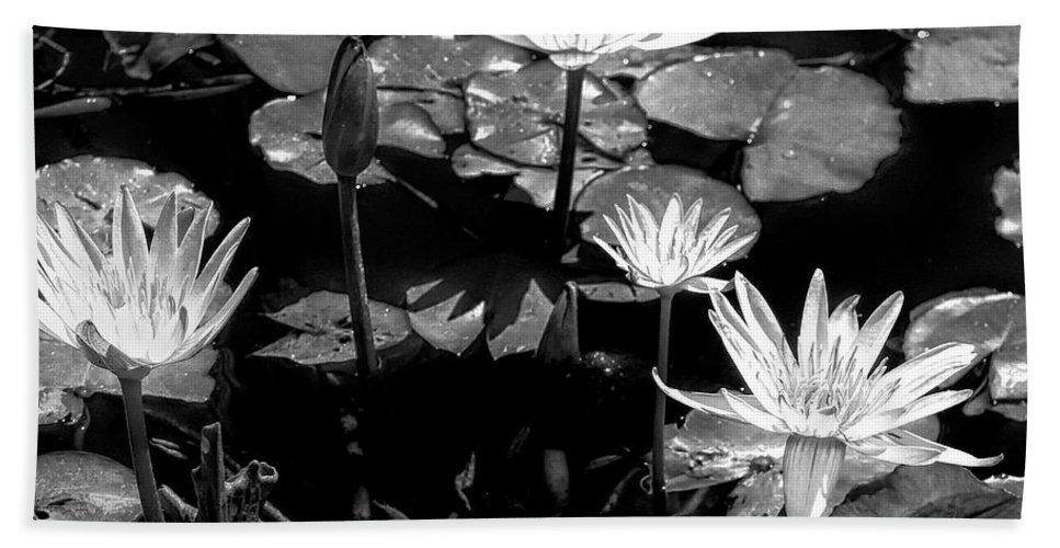 Black And White Bath Sheet featuring the photograph Moonlit Lotus by Dominic Piperata