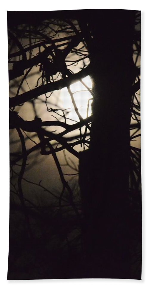 Moonlit Tree In The Forest Hand Towel featuring the photograph Moonlit Tree In The Forest by Maria Urso