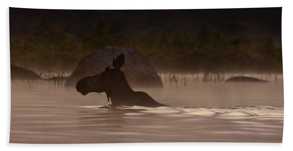 Moose Hand Towel featuring the photograph Moose Swim by Brent L Ander