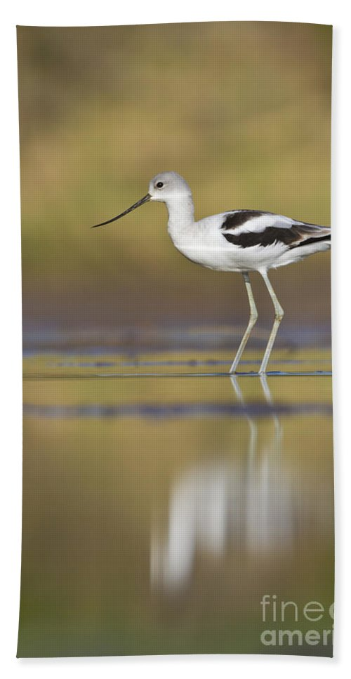 Bird Hand Towel featuring the photograph Morning Avocet by Bryan Keil