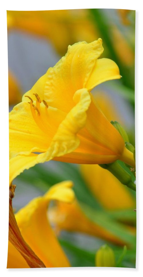 Morning Daylilies Bath Sheet featuring the photograph Morning Daylilies by Maria Urso