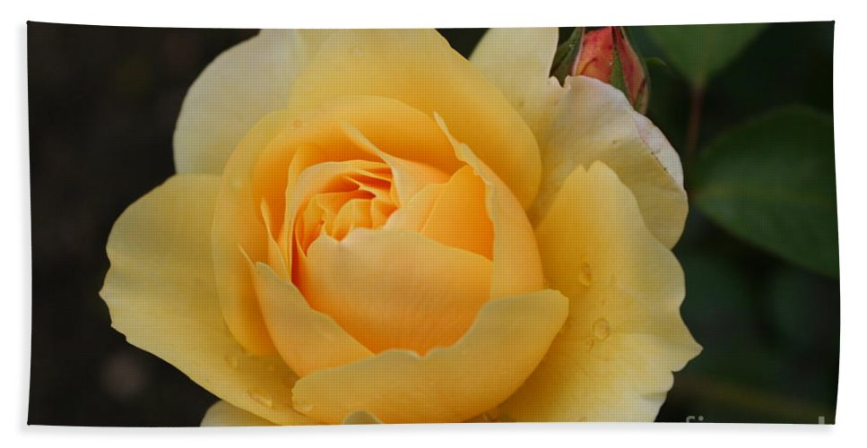 Rose Hand Towel featuring the photograph Morning Dew Rose by Christiane Schulze Art And Photography