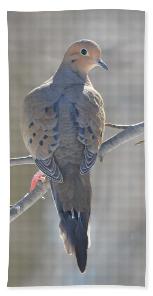 Morning Dove Hand Towel featuring the photograph Mourning Dove by Richard Bryce and Family