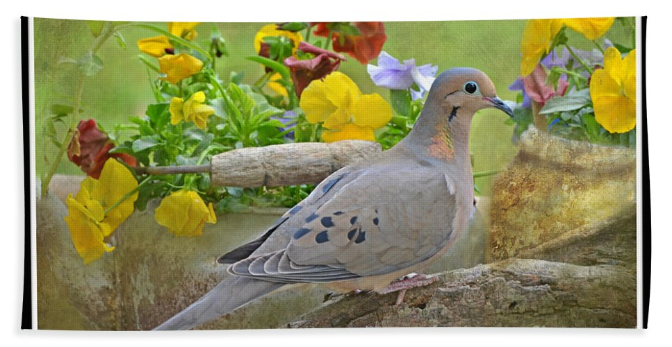 Nature Bath Sheet featuring the photograph Morning Dove With Pansies by Debbie Portwood