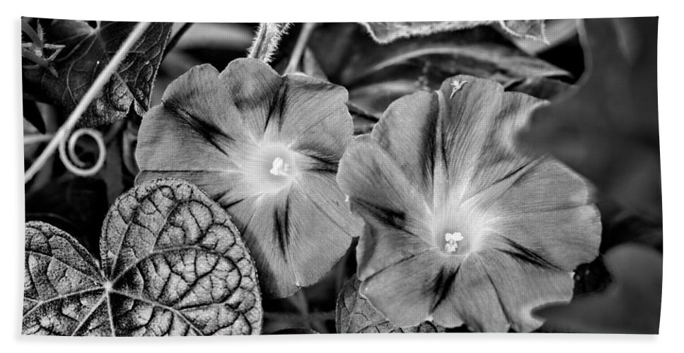 Flower Hand Towel featuring the photograph Morning Glory - Bw by Christopher Holmes