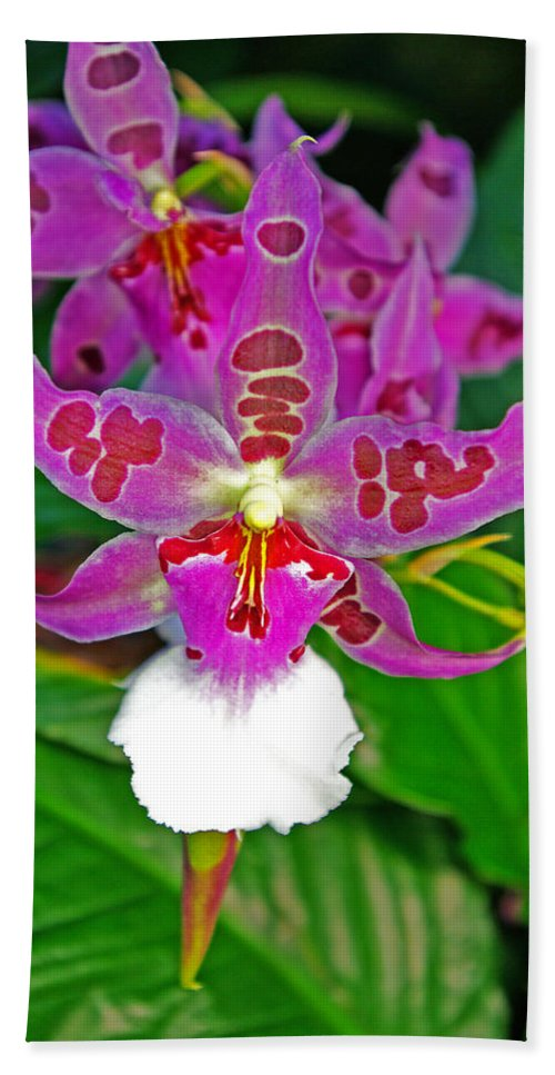 Orchids Hand Towel featuring the photograph Morning Joy Orchid by Rich Walter