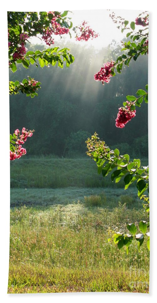 Crape Myrtle Hand Towel featuring the photograph Morning Marsh by Carol Groenen