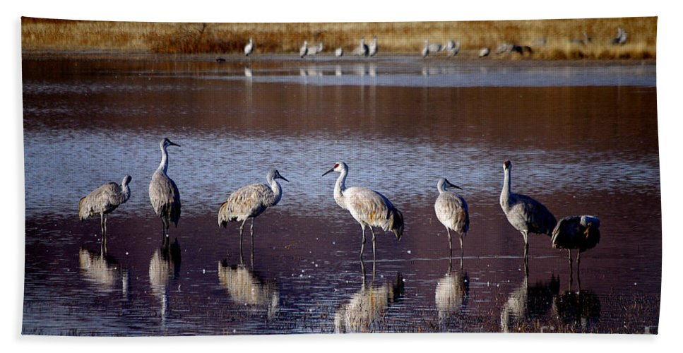 Photography Bath Sheet featuring the photograph Morning Reflections by Vicki Pelham