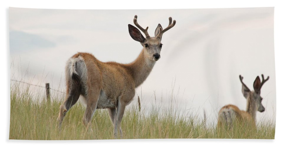 Deer Bath Sheet featuring the photograph Morning Stroll by Athena Mckinzie