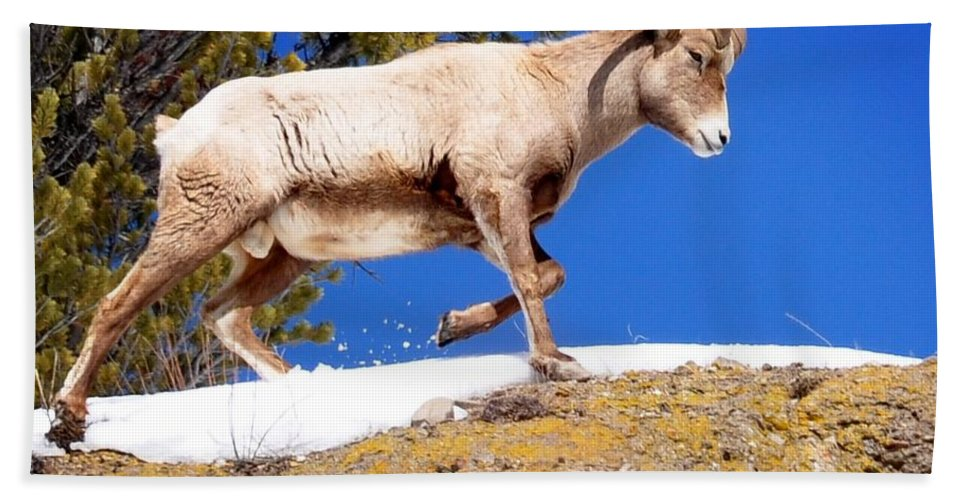 Hoback Junction Hand Towel featuring the photograph Morning Walk by Image Takers Photography LLC - Laura Morgan