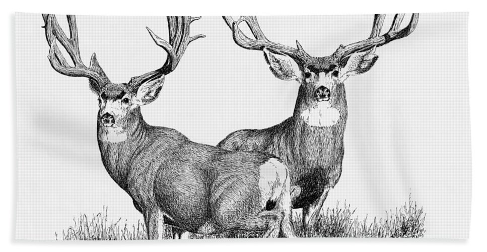 Large Mule Deer Bucks Bath Sheet featuring the painting Morty And Popeye by Darcy Tate