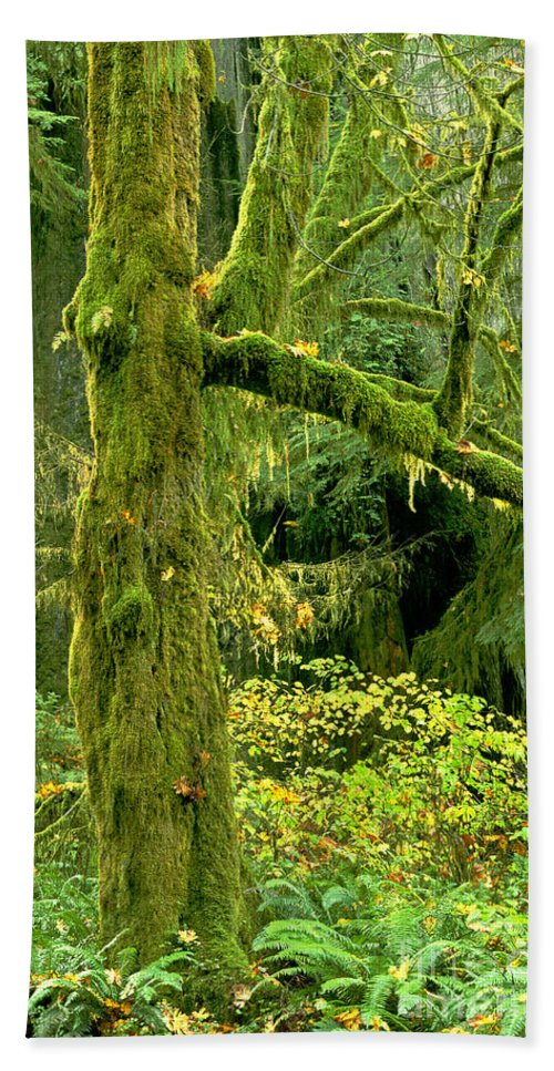 Big Leaf Maple Hand Towel featuring the photograph Moss Draped Big Leaf Maple California by Dave Welling