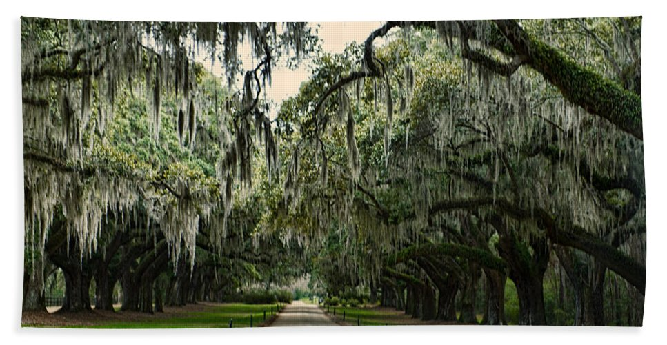 Trees Bath Sheet featuring the photograph Mossy Oaks by David Arment