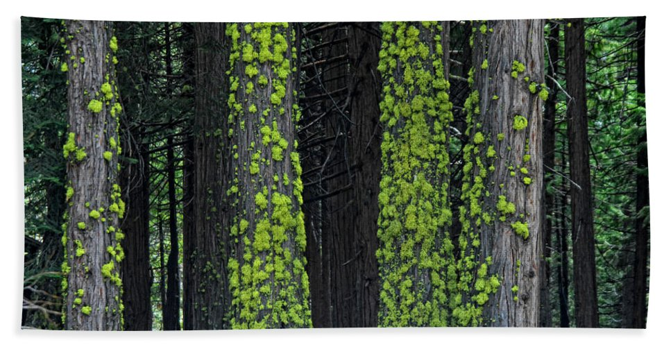 Tree Bath Sheet featuring the photograph Mossy Sentinels by Donna Blackhall