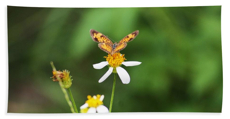 Weed Hand Towel featuring the photograph Moth On Weed by Chuck Hicks