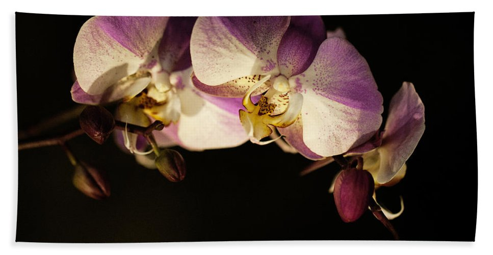Moth Orchids Hand Towel featuring the photograph Moth Orchids by Emma England