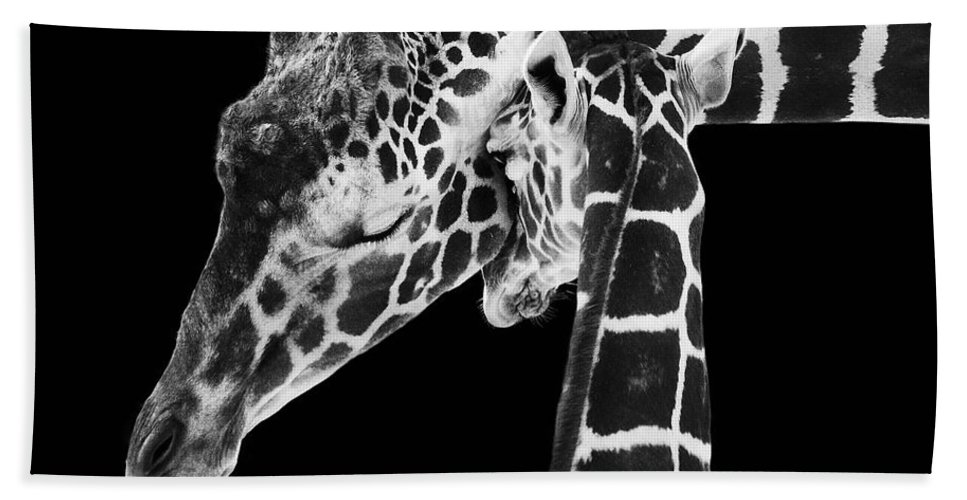 3scape Photos Bath Towel featuring the photograph Mother and Baby Giraffe by Adam Romanowicz