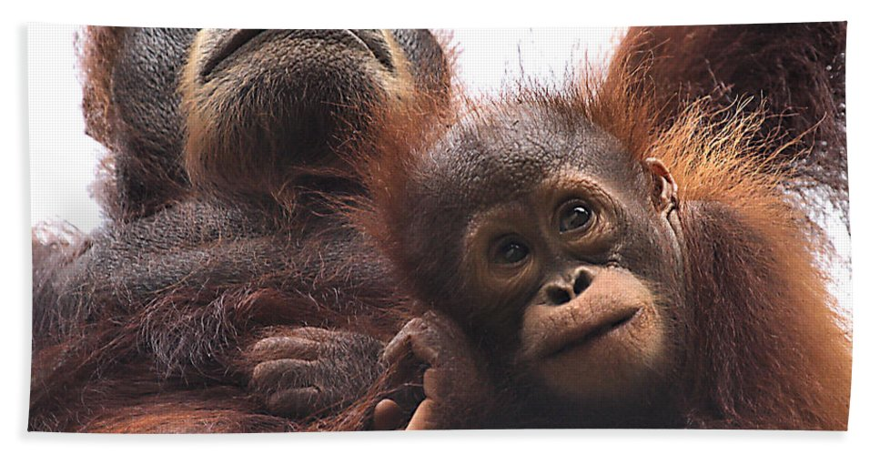 Orangutan Hand Towel featuring the photograph Mother And Baby Orangutan Borneo by Carole-Anne Fooks