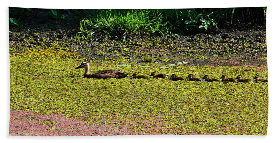 Ducks Bath Sheet featuring the photograph Mother Duck And Baby Ducks by Darren Burton