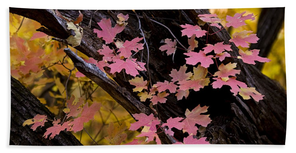 Fall Colors Bath Sheet featuring the photograph Mother Nature's Beauty by Saija Lehtonen