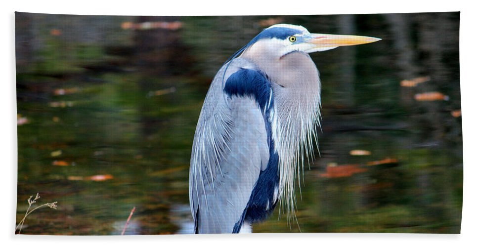 Great Blue Heron Bath Sheet featuring the photograph Motionless by Cynthia Guinn